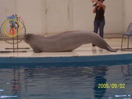 Moby Dick - Delfinarium Aqualand Antalya