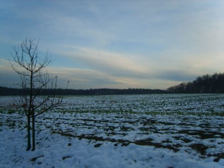 Sonnenuntergang Ende November - Rothenbügl