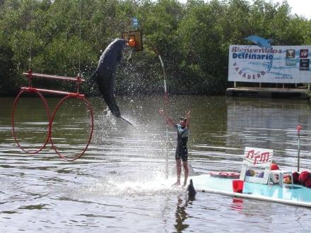 Delfin Show - Delfinarium Varadero