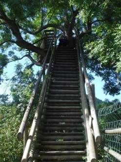Treppe zur schönen Aussicht - Tierwelt Herberstein
