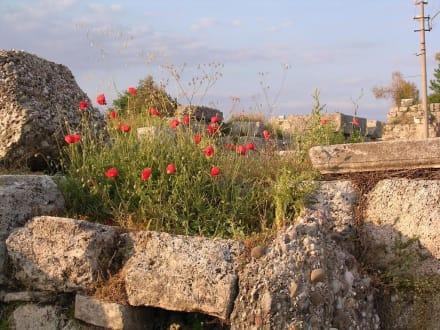 Mohn auf Ruinen - Ruinen Side