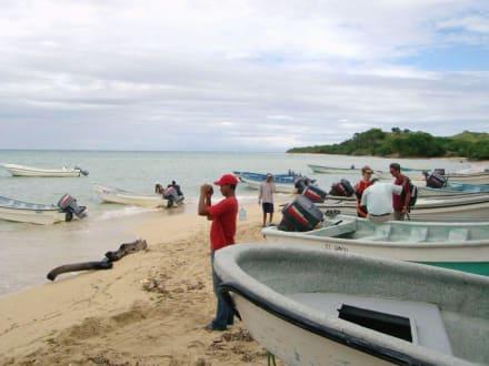 Die Speedboote zur Paradiesinsel - Paradies Insel