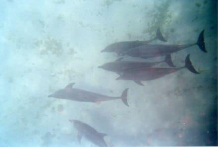 Schöne Natur - Delfin Tour Hurghada