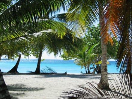 Insel Saona - Schnorcheln Punta Cana