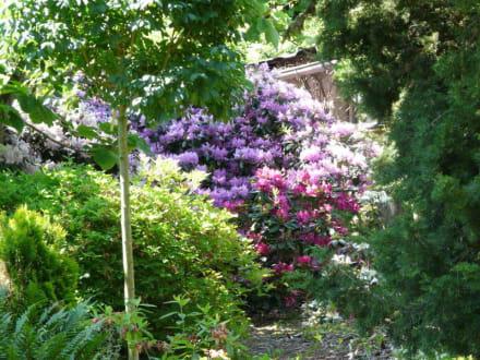 Sehr sch n angelegter garten bild botanischer garten for Angelegter garten