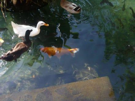 Goldfischteich - nicht nur für Fische! - Königsgräber von Gunung Kawi