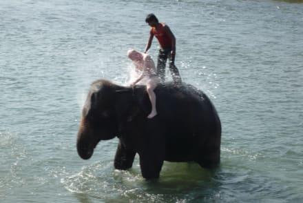 Bilder Mit Elefanten baden  Reisetipps