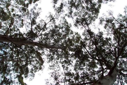 Baumspitze mit Aussichtplattform - Gloucester National Park