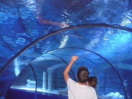 aquarium ausflug