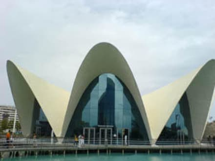 Oceanografico - Aquarium / Oceanongrafic
