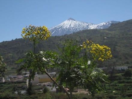 Teide im März - Teide Nationalpark