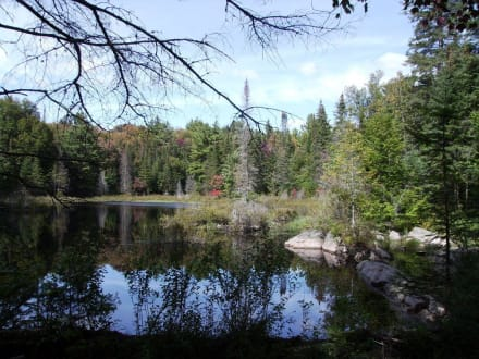 Der Mizzy-Lake-Trail im Algonquin Park - Mizzy Lake