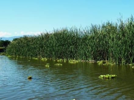 Tortuguero Kanal - Nationalpark Tortuguero