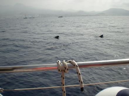 Wale auf dem offenen Meer - Whale Watching
