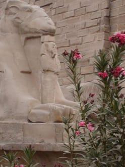 Westseite vom Luxortempel - Luxor Tempel