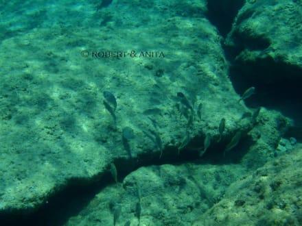 Diakoftis Unterwasser - Diakoftis Bucht