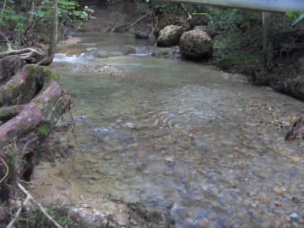 Wasserlauf im Wald - Scheidegger Wasserfälle