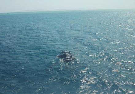 Faszinierende Tiere - Delfinschwimmen Delfine & Meer