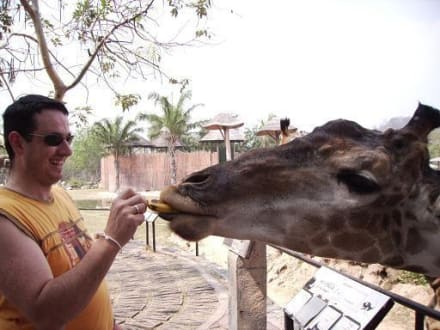 Giraffe füttern incl. - Khao Kheow Open Zoo