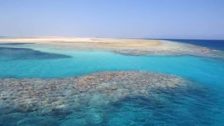Tolle Innenriffe laden zum Verweilen ein - Tauchbasis Freedom Divers Safaga