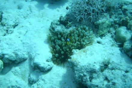 Nemo - Tauchen Hurghada