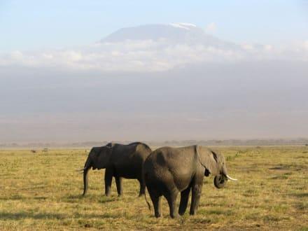 Zwei Elefanten vor dem Kilimanjaro - Nationalpark Kilimandscharo / Kilimanjaro