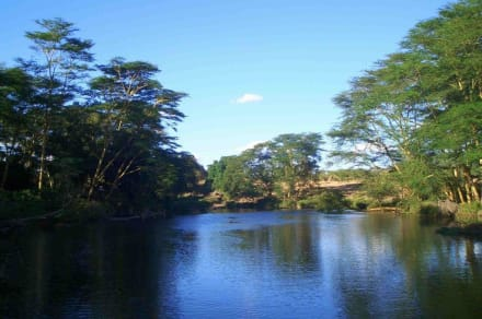 Mzima Springs - Tsavo West Nationalpark