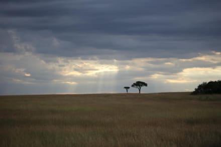 Masai Mara - D.M.-Tours