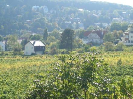 Neustifter Weinfelder - Neustifter Weingärten