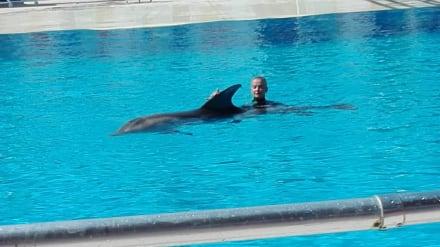 Delfinshow - Sealanya Delfinpark