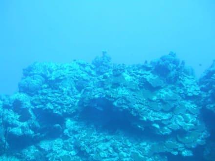 Unterwasserwelt durchs Bullauge - U-Boot Tour Atlantis Isla Cozumel