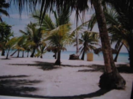 Strand von Saona - Isla Saona