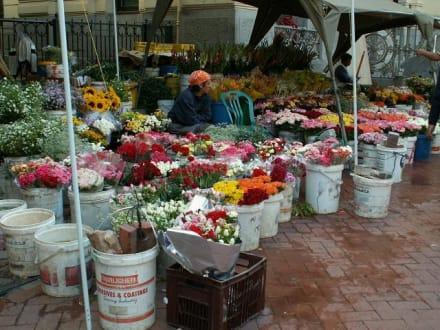 Blumenmarkt in Kapstadt - Stadtrundfahrt Kapstadt