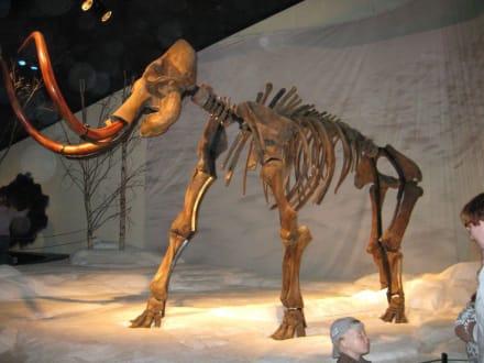 Mammut - Dyrepark
