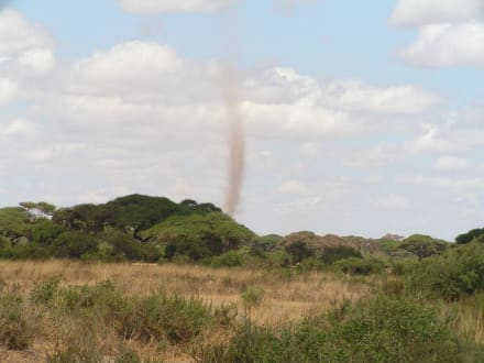 Sandsturm - Amboseli Nationalpark
