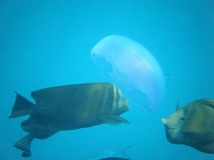 Gigantisch  - Schnorcheln Nabq Bay