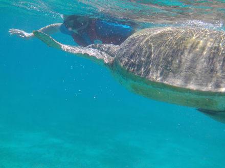 Gemeinsames schnorcheln mit einer Schildkröte - Schnorcheln Port Ghalib