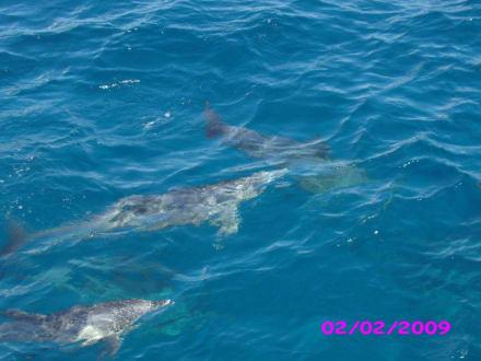 Delphintour - Delfin Tour Hurghada