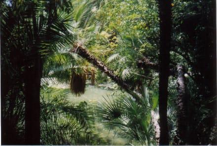 Arabischer Garten - Gärten von Alfabia