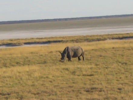Nashorn - Etosha Nationalpark