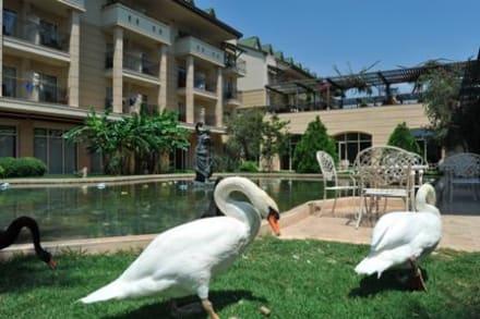 Hotel -