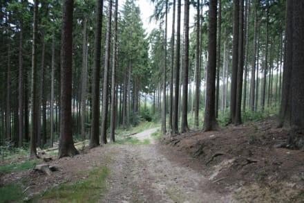 Wetter Schirgiswalde