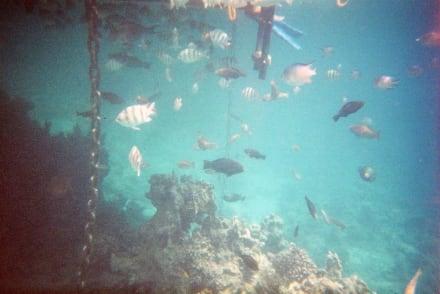 Sharks Bay - Sharks Bay