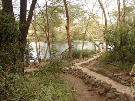 Mzima Spring - Tsavo West Nationalpark