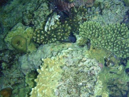 Tolles Riff... - Tauchen Sharm el Sheikh