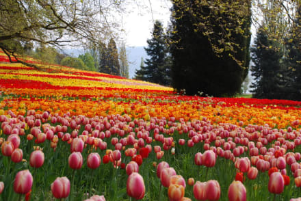 Frühling Auf Der Insel Mainau Bild Insel Mainau In Konstanz