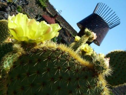 Kaktusgarten 4 - Jardin de Cactus / Kaktusgarten Guatiza
