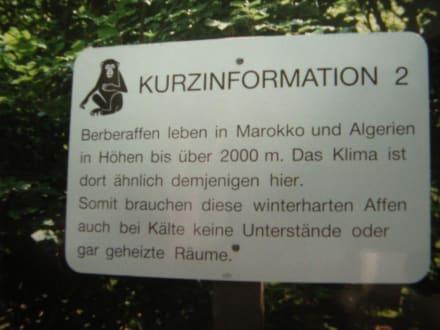 Info Tafel am Affenberg - Affenberg