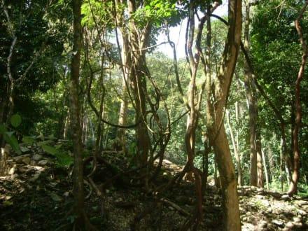 im Regenwald bei Palenque - Maya Pyramiden Palenque