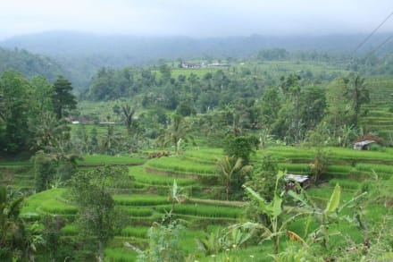 Reisterrassen - Balinesisch Himmelstreppen - Guide Manfred & Erna Denpasar